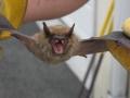 Bat Removed