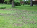 Skunk Grubbing