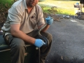 Black Snake Removed from Netting