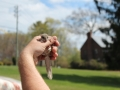 Flying Squirrel in hand