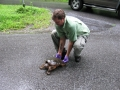 Snapping Turtle Removal from Road