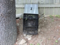Woodchuck caught in trap