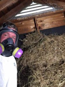 Large bird nest removal Cortlandt Manor, NY