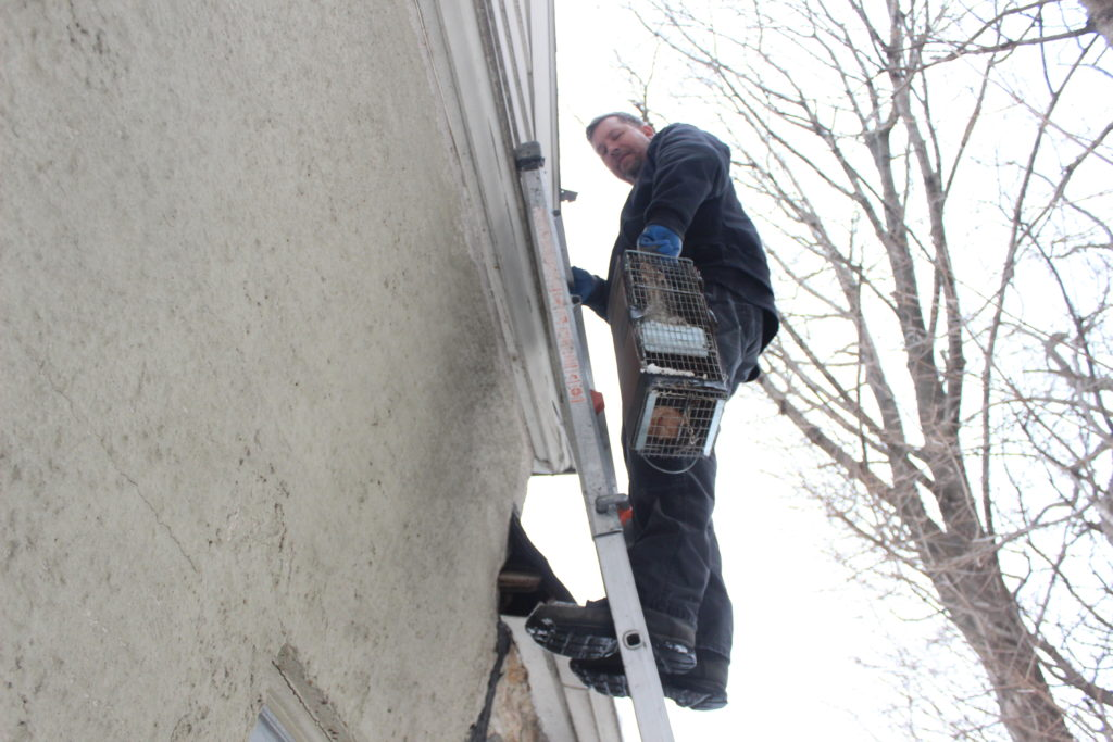 squirrel removal Larchmont NY