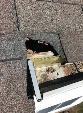 A raccoon dug into the attic in this Westchester home.